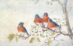 Full Sized Image: 4 blue birds with red breasts on dogwood, 3 on upper branch, one on lower Vintage Birds, Vintage Postcards, Vintage Images, Vintage Art, Vintage Prints, Vintage Style, All Birds, Little Birds, Decoupage