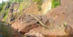 A crocodile leaps at tourists swimming in a national park in Australia, international news sites reported on Wednesday, December 19, 2012. Crocodile leaps at tourists Image Cred...