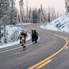 Bear chasing after a cyclist