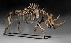 Wooly Rhino Skeleton $95,000