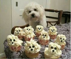 Shih poo Cupcakes. Credit: Picture from Shih Poo Nation FB page.