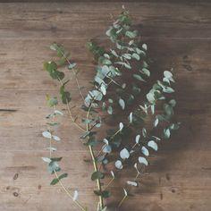 ちゃんとしたドライフラワーの作り方、知らないかも.......お花やグリーンを飾るのが大好きな私たち。室内で四季を感じられ、インテリアの中で直線的でない柔らかさを生みますよね。よく店長佐藤も自身のイン