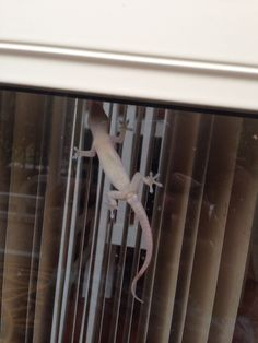 Day 79 DEC 2 I am grateful for geckos that eat bugs.