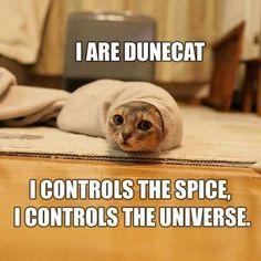 Dune cat controls the spice