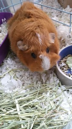 This looks like a cross between my guineas milky and mustache
