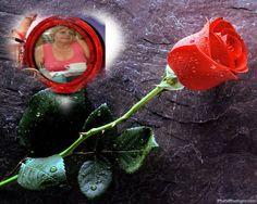 Something about a single red rose that is oh so romantic. I admit my absolute favorite flower is the classic red rose. Images Gif, Rose Images, Bing Images, Alex Sirvent, Beautiful Red Roses Images, Beautiful Soul, Amazing Flowers, Red Rose Pictures, Ronsard Rose