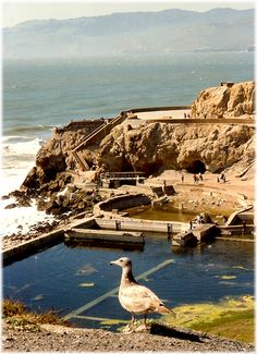 http://peggy-w.hubpages.com/hub/Images-Hiking-San-Francisco-Cliff-House-and-Sutro-Baths