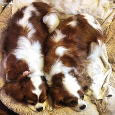 We're doing what we do best...snoozing :) #DoggyMember Bailey and Holly