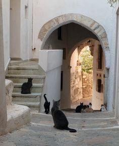 猫と風景5