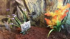 . Spider, Plants, Collection, Number, Female, Spiders, Plant, Planting, Planets