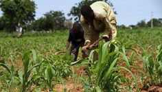 Banks give N2 trillion credit to farmers in 2016: A total of N2 trillion was given out as credit to farmers in 2016 by various money…