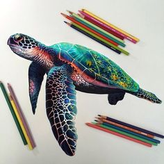 """Sea Turtle""Art created with colored pencils. Animal Drawings, Cool Drawings, Realistic Drawings, Horse Drawings, Beautiful Drawings, Colorful Drawings, Drawing Sketches, Illustration Au Crayon, Color Pencil Art"