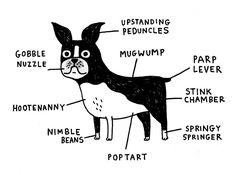 Charting the correct terminology for the anatomical features of three dog breeds