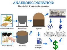 anaerobic digestion Anaerobic Digestion, Survival Kit, Compost, Biodegradable Products, Environment, Survival Kits, Composters