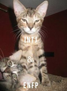 INTJ + ENFP.... This is G and I Hahahaha!!! And there goes that face I make!!!!