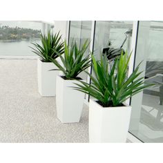 Available in six sizes and 16 finishes, this tapered square planter pot is suitable for modern & traditional design schemes. Made of high quality fiberglass it can withstand the outdoor elements and interior furnishings. Outdoor Planters, Hanging Planters, Planter Pots, Outdoor Decor, Tall Planters, Indoor Outdoor, Outdoor Living, Mason Jar Flowers, Flower Vases