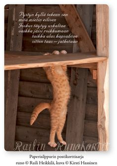Finnish Words, Note To Self, Simple Living, Poems, Thoughts, Cats, Quotes, Animals, Life