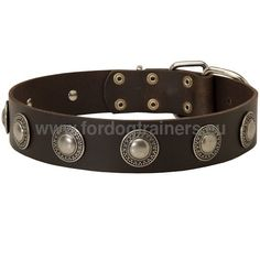Pitbull Leather Collar with Embossed Plates C73# #1057 Co...