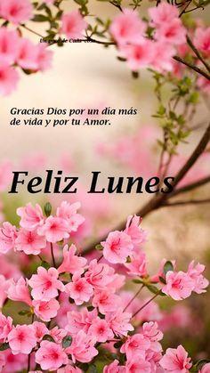 Hola mi amor Te deseo un lindo dia mi vida... te amo