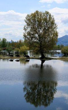 Kerkini lake, Macedonia Hellas