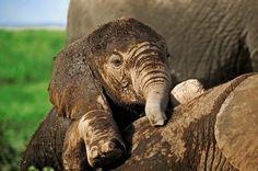 free elephant backgrounds for desktop