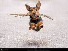 Flying dog by Cristina Palma Moreira