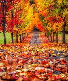 Autumn Love ♥