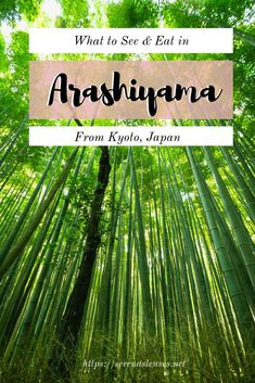 Visiting the Arashiyama Bamboo Forest and wondering what else there is to do and eat? This guide shows you the best things to do in Arashiyama and the best food you have to eat in Arashiyama Japan Travel Vacation List Holiday Tour Trip Destinations Japan Travel Guide, Asia Travel, Travel Guides, Travel Hacks, Thailand Travel, Budget Travel, Japan Japan, Travel Around The World, Trip Planning