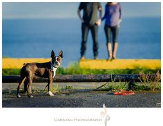 Shaina & Shane's Engagement [Beacon Hill Park Victoria Engagement Photography] Tide Pools, Vancouver Island, Little Dogs, Fashion Shoot, Engagement Photography, Boston Terrier, Have Fun, Editorial, Victoria
