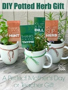 Great Gift Ideas for Everyone - Blue Pelican Gifts DIY Potted Herb Gift Perfect for Mothers Day or Teacher Appreciation Diy Gifts For Mom, Mothers Day Crafts For Kids, Diy Mothers Day Gifts, Mother Gifts, Cute Gifts, Kids Crafts, Mothersday Gift Ideas, Diy Gifts For Teachers, Fathers Day Ideas