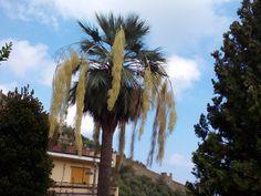 Palma Blu in Liguria