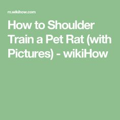 How to Shoulder Train a Pet Rat (with Pictures) - wikiHow