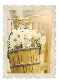 Mellow Yellow...old bucket filled with delightful white daisies...tied onto a distressed old yellow chair.