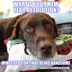 I think I just met the perfect guy. Dog Jokes, Funny Dog Memes, Funny Animal Memes, Funny Dogs, Animal Funnies, Animal Jokes, Funny New Years Memes, New Year Meme, Dog Best Friend Quotes