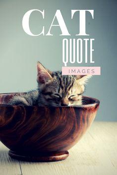 Cat quotes in images!