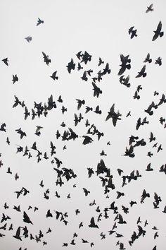 #movement . birds .