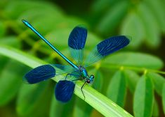 Blue dragonfly by Korbel László - Photo 263754783 / Dragonfly Photos, Blue Dragonfly, Dragonfly Tattoo, Photo Reference, Art Reference, Butterflies Flying, Blue Art, Inktober, Cute Animals