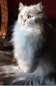 Top 10 Cat Breeds Fo mother nature moments - more pictures on https://www.pinterest.com/sy214/all-creatures-great-small/