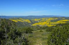 The Superbloom is taking place right now on the Carrizo Plain Central California April 2 2017 [OC] [6016x4000]   landscape Nature Photos