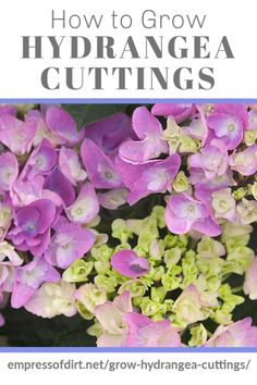 Learn how to take hydrangea cuttings to grow more plants. For instructions, see the step-by-step tutorial. Great way to get free plants. Flower Garden, Planting Bulbs, Growing Hydrangeas, Garden Shrubs, Propagating Plants, Container Gardening Flowers, Growing Flowers, Free Plants, Flowering Vines