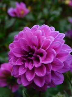"Clover on Twitter: ""my garden this morning 😊… """
