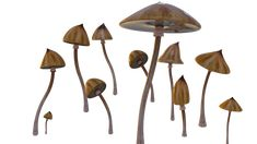 Tips for Buying Magic Mushrooms Types Of Magic, Photo Logo, Free Pictures, Stuffed Mushrooms, Tips, Photos, Food, Bonjour, Stuff Mushrooms