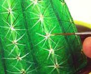 Rock cactus                                                                                                                                                                                 More