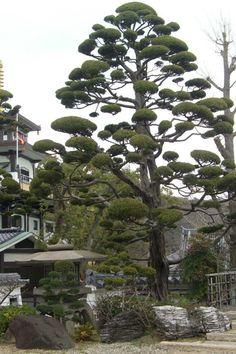 At Kobe, Japan.  // Great Gardens & Ideas //