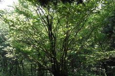 제주 장생의 숲 1