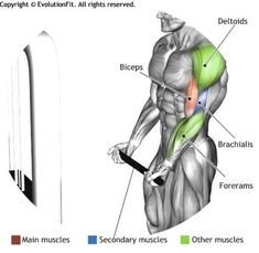BICEPS - STANDING BICEPS CABLE CURL