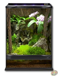 12x12x18 Zoo Med Terrarium built as a forest habitat. DIY this terrarium with Hydroballs, Eco Earth, Frog Moss, ReptiRapids Medium Wood Waterfall, Cork Flats, and live plants of your choosing.