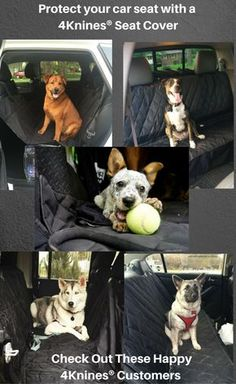 Keep Your Car Clean When Traveling With Pup A 4KninesR Dog Seat Cover