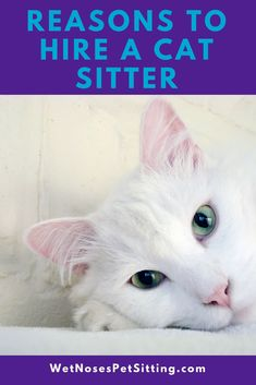 Are you considering leaving town and cannot decide what to do with your cat? Think about hiring a cat sitter! Wet Noses Pet SittingFort Collins, Loveland, Pet Sitter, Dog Walker, Cat Sitter #cat #cats #sitter