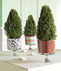 Bring a little Christmas tree or bush to your centerpieces in our Trifle Bowl.